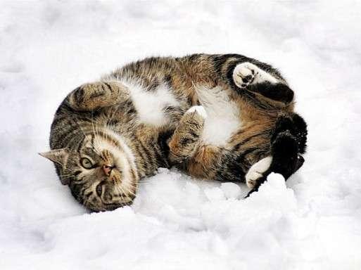 noticias Gatos locos en la nieve